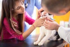 Untersuchen Sie den Spezialisten, der den Mund und die Zähne der Katze in der Tierarztklinik überprüft Lizenzfreie Stockbilder