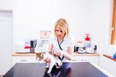 Untersuchen Sie die Prüfung einer kleinen kranken Katze mit einem Stethoskop Lizenzfreie Stockfotos