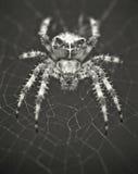Untersuchung die Augen einer Spinne Lizenzfreies Stockfoto