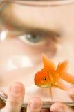 Untersuchung Goldfish-Schüssel Stockbilder