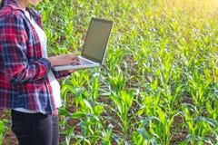 Untersuchungsanlage des Agronomen auf dem Maisgebiet, Paarlandwirt und Forscher, die Maispflanze analysieren stockbilder