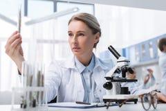 Untersuchungsreagenzglas des Wissenschaftlers lizenzfreies stockfoto