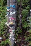 Unterwäsche auf Evergreens-Berg Washington, BC lizenzfreie stockfotografie