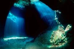 Unterwasser Stockfotos