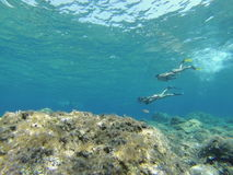 unterwasser Lizenzfreie Stockbilder