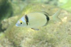Unterwasserabbildung eines Fisches stockfoto