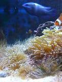 Unterwasseranlagen Stockfoto