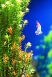 Unterwasseranlagen mit einem Fisch Lizenzfreie Stockbilder