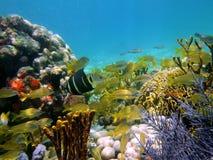 Unterwasseransicht in das karibische Meer Stockfotos
