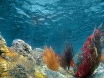 Unterwasseransicht des Ozeans mit Anlagen und Koralle stockbild