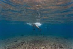 Unterwasseransicht eines Surfers Lizenzfreie Stockfotos