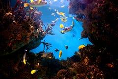 Unterwasseransicht, Fisch, Korallenriff lizenzfreie stockfotos