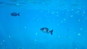 unterwasseratemgerät Stockfotografie