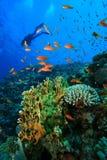Unterwasseratemgerät-Taucher erforscht Korallenriff Stockfotos