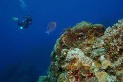 Unterwasseratemgerät-Taucher und blauer Zapfen - Cozumel, Mexiko Lizenzfreie Stockfotografie