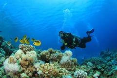 Unterwasseratemgerät-Taucher und tropische Fische stockfotos