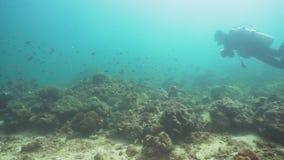 Unterwasseratemgerät-Taucher Unterwasser Philippinen, Mindoro stock video