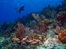 Unterwasseratemgerät-Taucherschwimmen entlang einem Riff lizenzfreie stockbilder