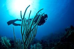 Unterwasseratemgerättaucher auf einem tropischen Riff Stockbilder