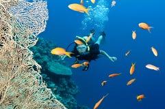 Unterwasseratemgerättaucher mit Fischen und Koralle Stockfoto