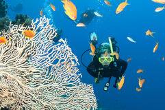 Unterwasseratemgerättaucher mit Fischen und Koralle Lizenzfreies Stockfoto