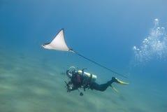 Unterwasseratemgerättaucher- und -adlerstrahl. Lizenzfreies Stockbild