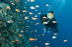 Unterwasseratemgerättaucher und colorfull Fische Stockbild