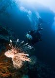 Unterwasseratemgerättaucher und Lionfish stockfotos