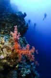 Unterwasseratemgerättaucher und Meerkoralle Lizenzfreie Stockfotografie