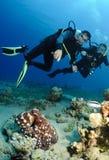 Unterwasseratemgerättaucherblick auf Krake Stockfotos
