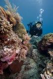 Unterwasseratemgerättaucherschwimmen über einem tropischen Korallenriff Stockfotos