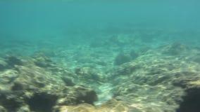 Unterwasserbeschaffenheit und Fauna im ionischen Meer, Zakynthos, Griechenland stock video