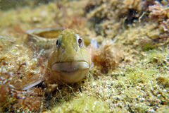 Unterwasserbewohner Stockfotografie