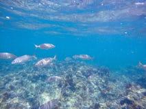 Unterwasserbild Las-Dienstturnus-Naturreservat Denia Alicante Spain lizenzfreies stockfoto