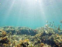 Unterwasserbild Las-Dienstturnus-Naturreservat Denia Alicante Spain stockbilder