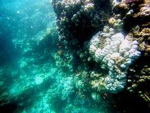 Unterwasserbild mit Fischen Stockfotos