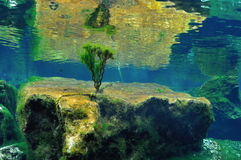 Unterwasserbusch stockbild