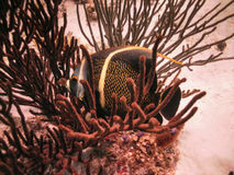 Unterwasserengel Lizenzfreies Stockbild