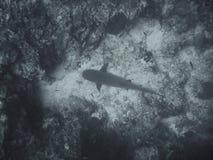 Unterwasserfische Stockfotografie
