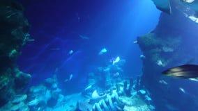 Unterwasserfische, Strahlen und Haifische stock footage