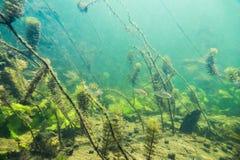 Unterwasserflusslandschaft mit kleinen Fischen lizenzfreie stockfotos