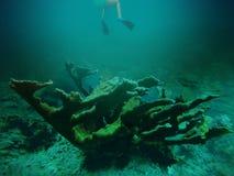 Unterwasserglück Stockfotos