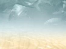 Unterwasserhintergrund mit Fischen Stockbild