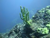Unterwasserkoralle lizenzfreie stockfotografie