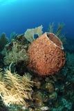 Unterwasserkoralle Stockfoto