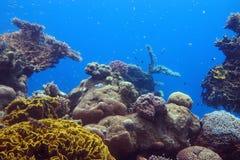 Unterwasserkorallen und Fische des Roten Meers Stockbilder