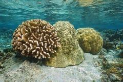 Unterwasserkorallenform-Verschiedenartigkeit Pazifischer Ozean stockbilder