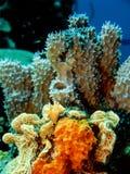 Unterwasserkorallenriff Lizenzfreie Stockfotografie