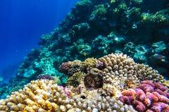 Unterwasserkorallenriff des Roten Meers Lizenzfreie Stockfotografie