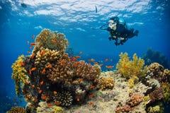 Unterwasserkorallenriff mit Erforschungsbotto meer des Frauensporttauchers stockfotos